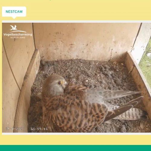 webcam dieren